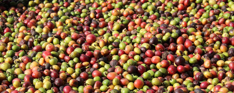 Kuba Essen Kaffeebohnen