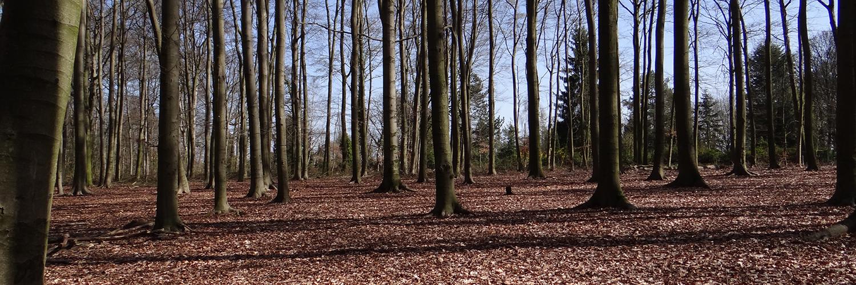 Wald Bergkamen