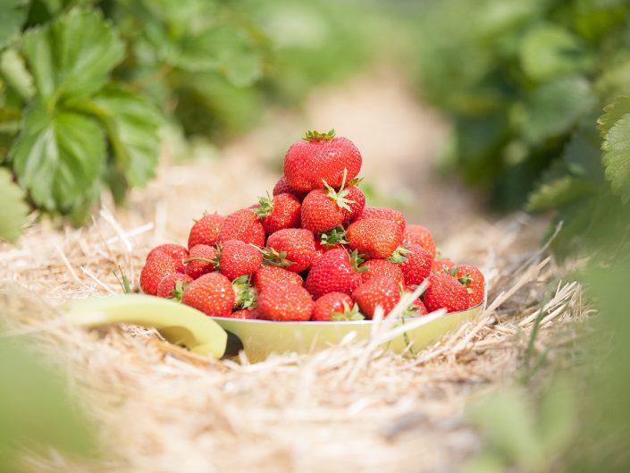 Die Grüne Pfanne im Erdbeerfeld
