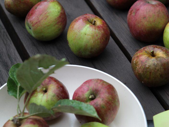 Die Grüne Pfanne bei der Apfelernte